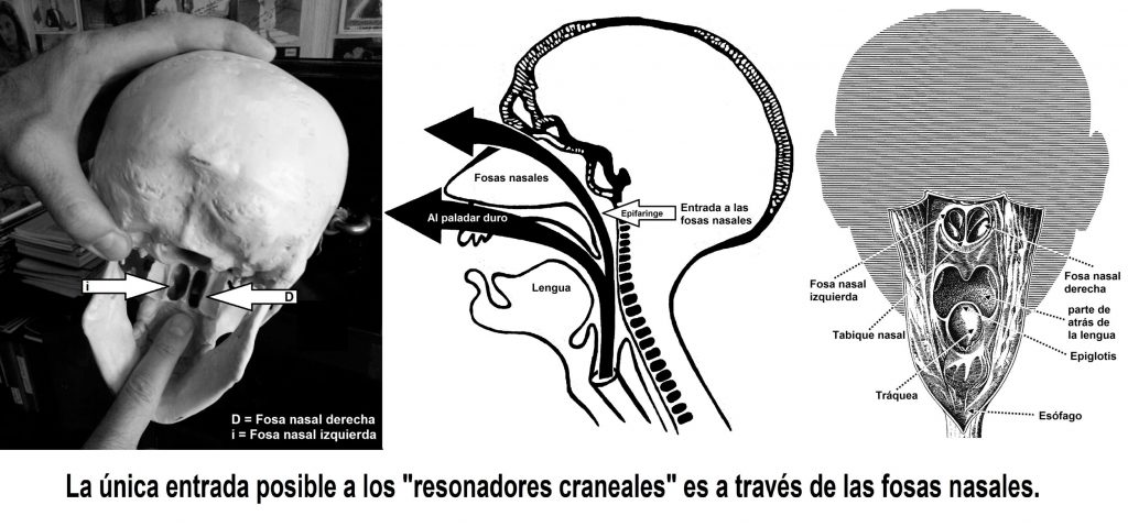 auladecanto-resonadores-craneales-1